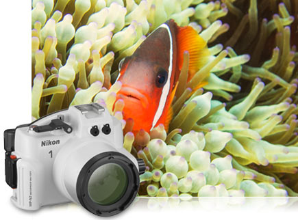 close up photo of clown fish among reef life and inset photo of WP-N2 underwater housing