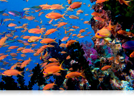 photo of school of orange fish swimming in water on a reef