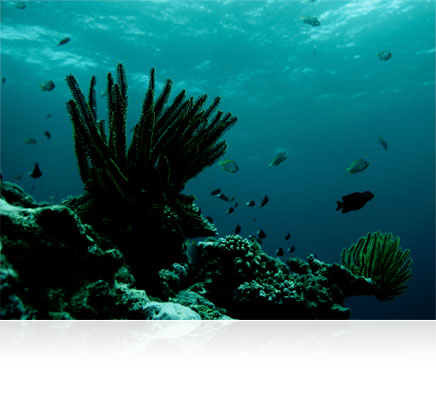 Nikon 1 photo of underwater life shot with a Nikon 1 camera in a WP-N3 waterproof housing