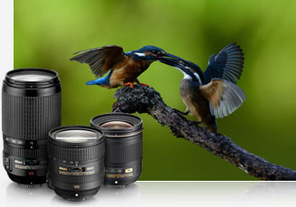 Photo of F/mount NIKKOR lenses and a photo of birds on a branch