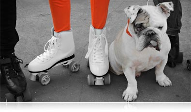 selective color photo of men and women's feet in rollerskates and a bulldog