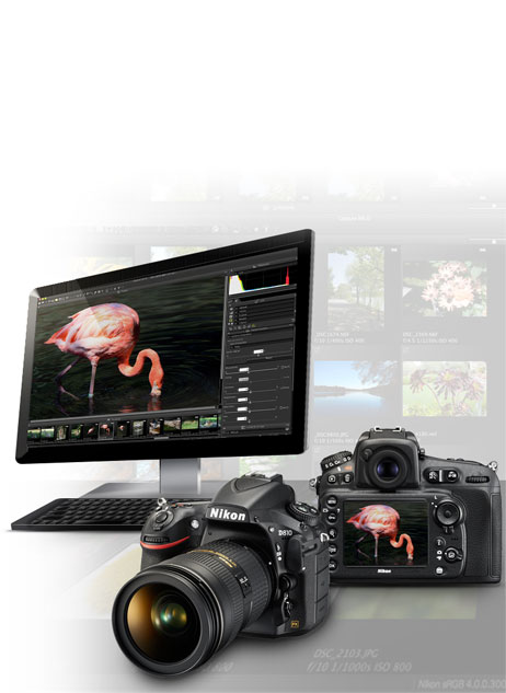 Photo of the Nikon D810 DSLR front and rear with a photo of a flamingo on the LCD and on a computer screen in the Capture NX-D software with a background of image thumbnails
