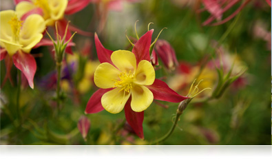 close up photo of yellow and red flowers with shallow depth of field