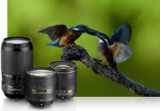 Photo of birds photographed with the Nikon D610, inset with a trio of NIKKOR lenses