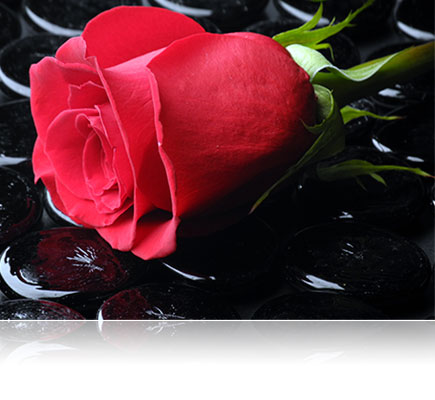 photo of a red rose on a black background, illuminated with the SP700 Speedlight