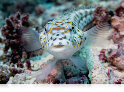photo of a fish on a reef close up staring at the camera