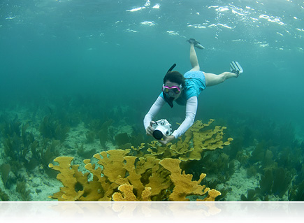 Photo of a young girl snorkeling underwater on a reef with a Nikon 1 camera inside the WP-N1 waterproof housing
