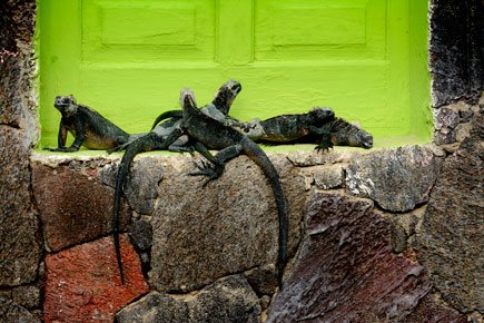 Reed Hoffmann photo of lizards