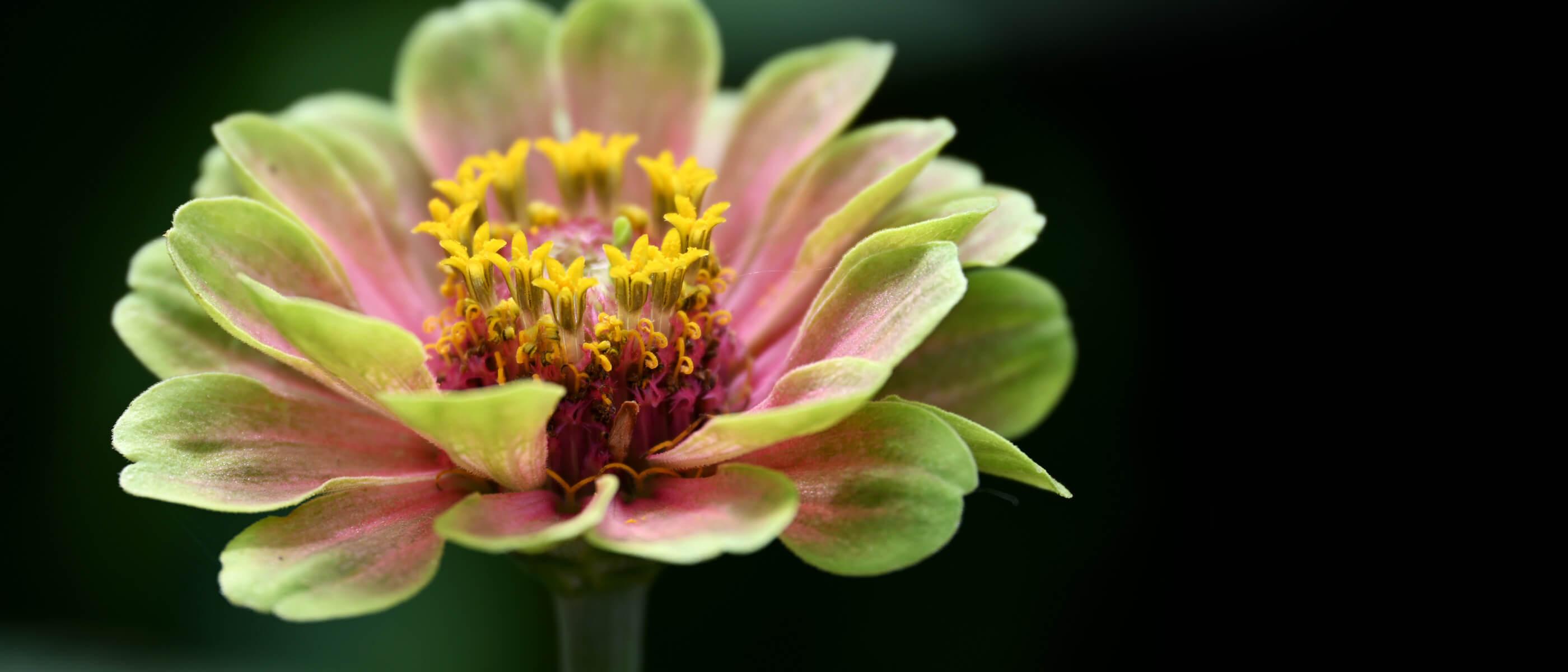 photo of a flower, taken with the NIKKOR Z DX 18-140mm f/3.5-6.3 VR lens