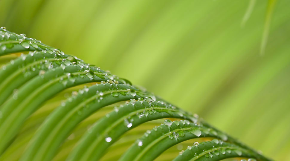 Photo of greenery with water drops on the leaves, against a green background, taken with NIKKOR Z 24-200mm f/4-6.3 VR