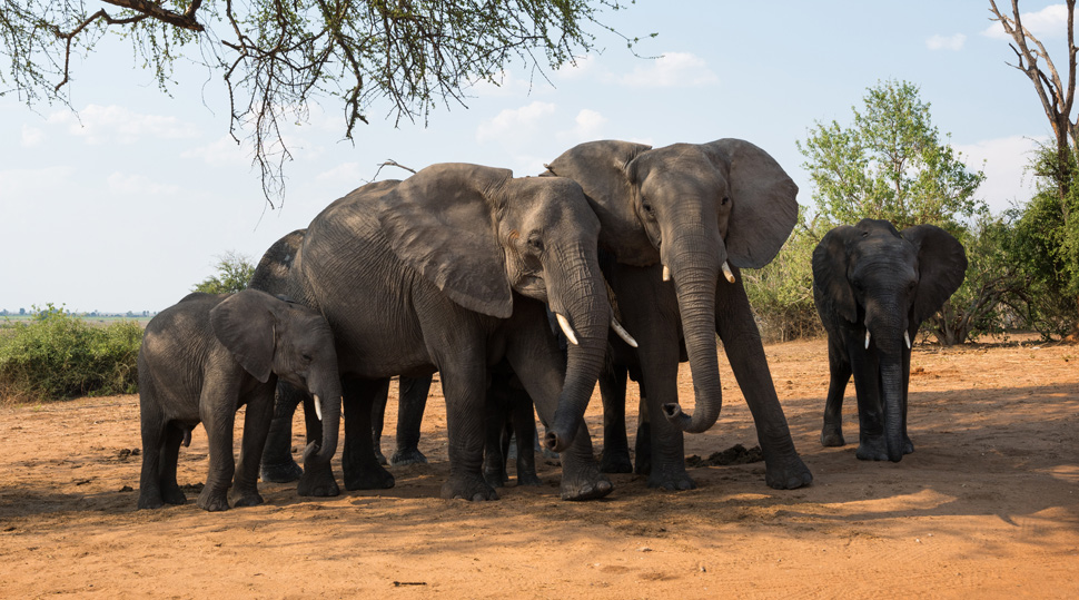 photo of a herd of elephants taken with the NIKKOR Z 14-30mm f/4 S
