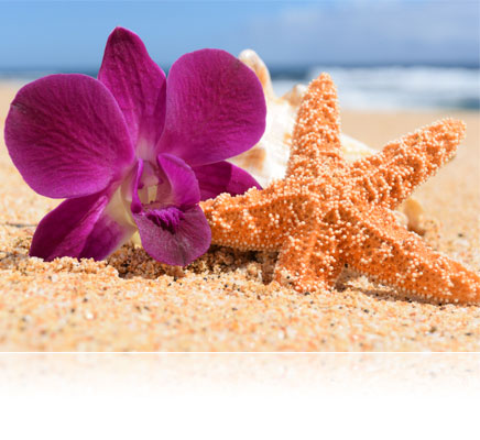 Nikon 1 S2 photo of a starfish, shell and flower on the sand