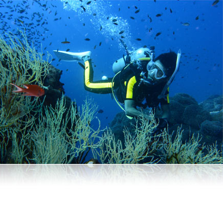 Photo of a scuba diver and fish on a reef shot with the Nikon 1 AW1
