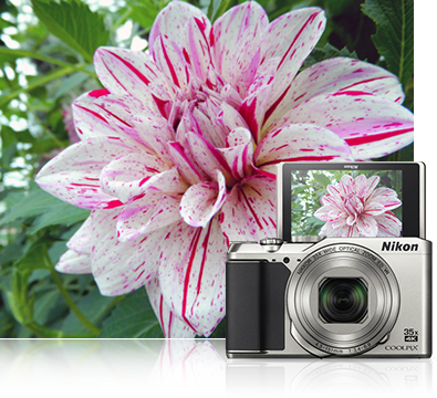 COOLPIX A900 photo of a flower inset with the camera and the flower photo on the LCD