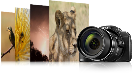 COOLPIX B700 photos of a bird, flower, night scene and lion with the camera stacked side by side