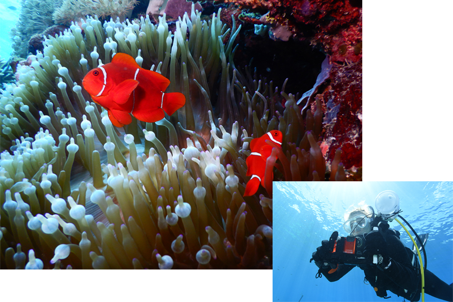 Photo of clown fish on a reef, shot with the W300, inset with a shot of a SCUBA diver with the W300