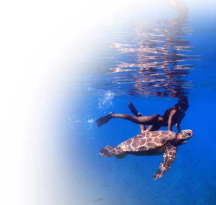 Photo of a woman snorkeling with a large turtle