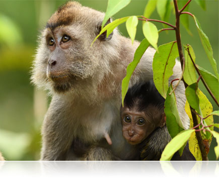 D500 DSLR photo of a monkey and its baby in the jungle
