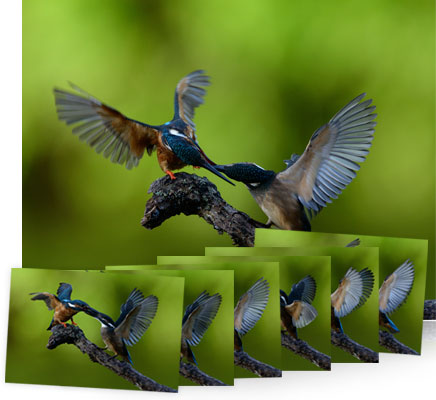 Photo of birds and inset small frames of the birds showing the capabilities of the Autofocus