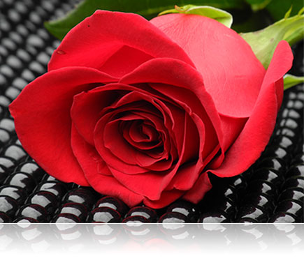 photo of a red rose on a black background, lit with Nikon Speedlights