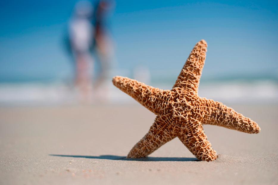 Fotografía tomada con un lente AF-S NIKKOR 50mm f/1.8G de una estrella de mar sobre la arena con el fondo difuminado