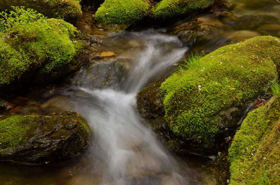 Photo of water running over moss covered rocks, shot with the AF-S DX Micro NIKKOR 40mm f/2.8G