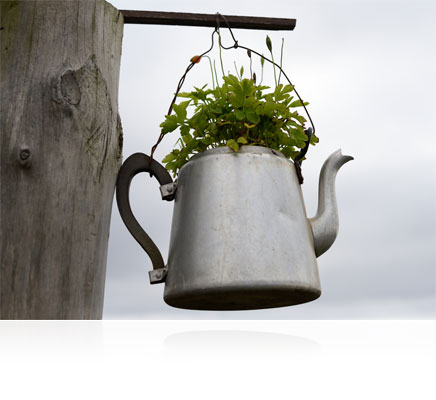 Photo of a watering can filled with a plant, shot with the AF-S NIKKOR 50mm f/1.8G Special Edition lens