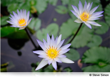 Photo of purple tinted flowers and lily pads on water taken with the AF-S NIKKOR 28mm f/1.8G lens.