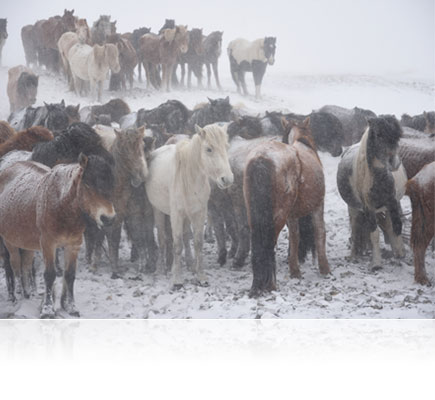 Photo of horses in snow, shot with the AF-S DX NIKKOR 16-80mm f/2.8-4E ED VR lens