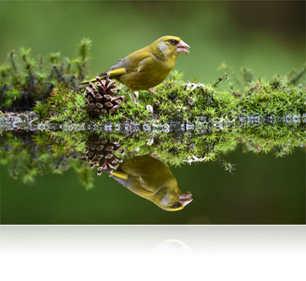 Photo of a bird and its reflection in water shot with the AF-S NIKKOR 200-500mm f/5.6E ED VR