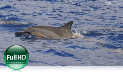 Photo of a dolphin in the water and the Full HD video icon showing video capabilities