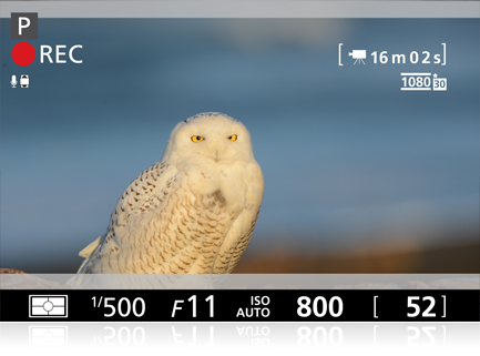 photo of an owl with the overlay of shooting information, such as seen in the viewfinder or LCD