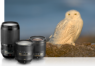photo of three NIKKOR lenses clustered in front of an image of an owl on a rock in nature