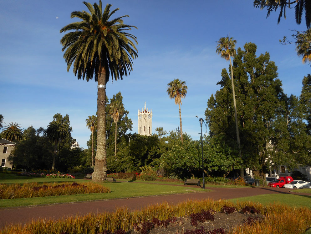 Photo of a park with palm trees