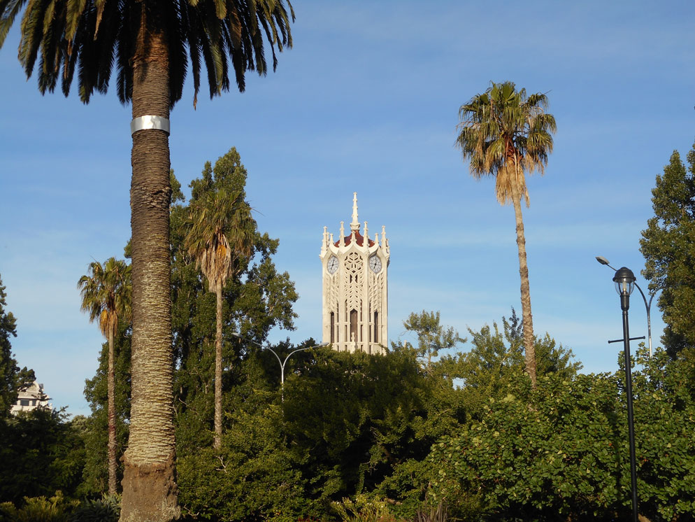 Zoomed in photo of the park with palm trees and a building in the background