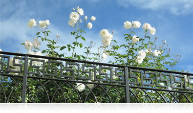 Photo of flowers over a railing and blue sky highlighting RAW file shooting