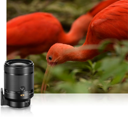 1 NIKKOR VR 70-300 f/4.5-5.6 lens photo of red birds in the jungle inset with a product photo of the lens