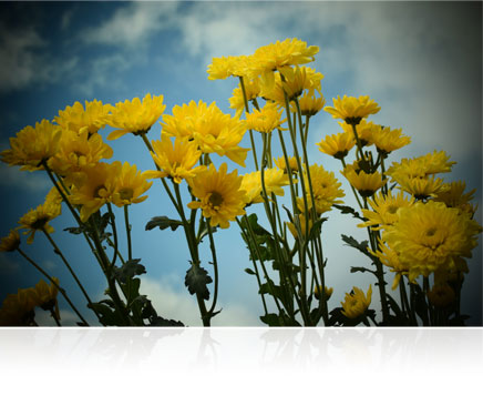 Nikon 1 J4 photo of yellow flowers, shot using a creative special effect