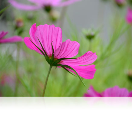 Photo of a flower shot with the AF-S DX NIKKOR 18-300mm f/3.5-6.3G ED VR lens