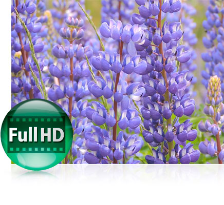 Close up photo of flowers and the Full HD video icon highlighting video capabilities