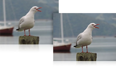 two photos of a seagull on a piling showing blur and a sharp shot using VR