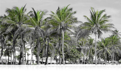 black and white photo with selective green color of palm trees