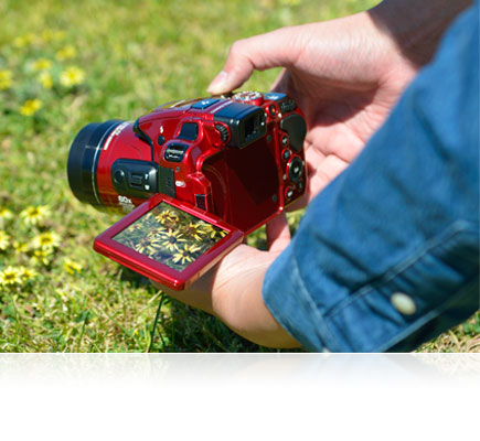 Photo of a person holding the COOLPIX P610 near the grass with the LCD swiveled out and a photo of flowers on the screen