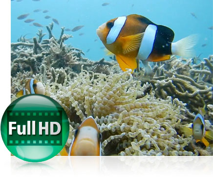 Photo of a clown fish underwater on a reef and the Full HD video icon showing video functionality