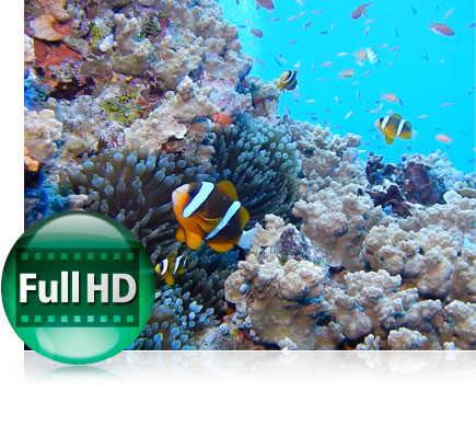 COOLPIX AW130 underwater photo of fish and coral, with the Full HD video icon inset