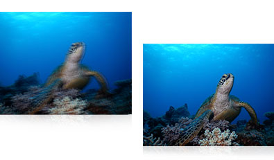 COOLPIX AW130 underwater photo of a turtle in focus and blurry showing VR image stabilization
