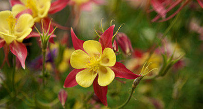 Photo of yellow and red flowers and nice bokeh